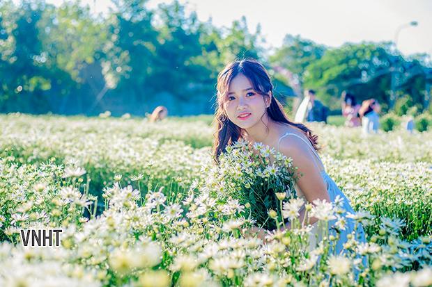 Thiếu nữ duyên dáng bên cánh đồng cúc họa mi