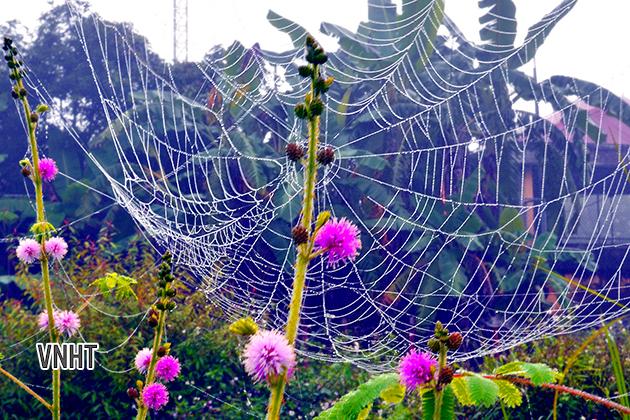 Vẻ đẹp của những hạt sương mai