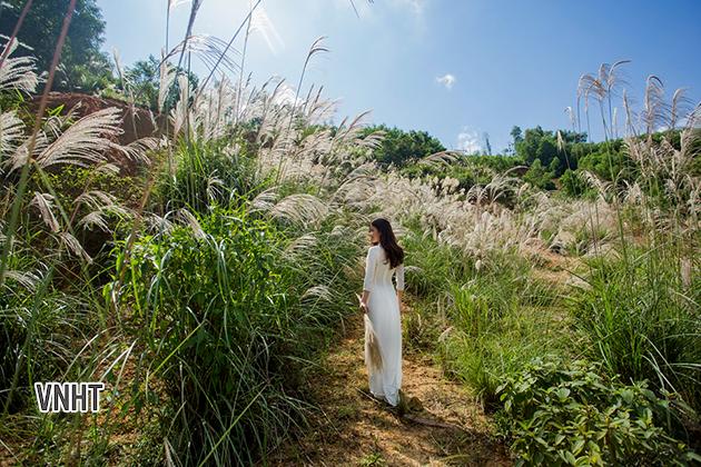 Mùa hoa lau hoang sơ phía núi – Văn nghệ Hà Tĩnh