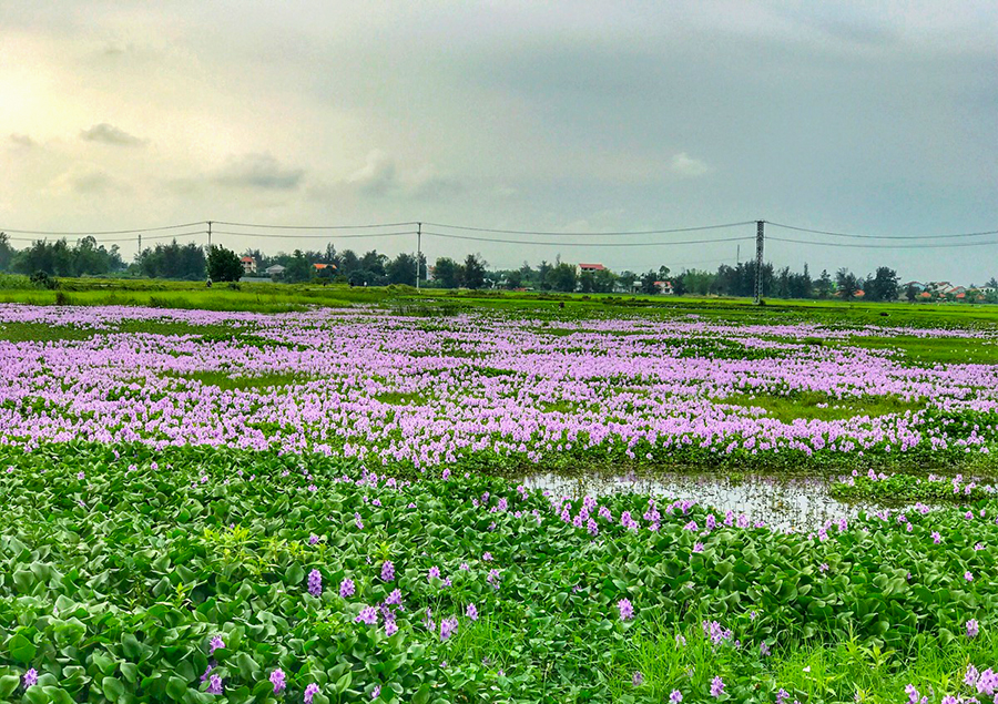 Thơ thiếu nhi và lời bình: Hoa vừa đi vừa nở