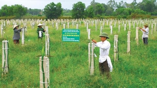 Bút ký dự thi TRUÔNG BÁT, NGÀY ẤY VÀ BÂY GIỜ  của Nguyễn Ngọc Vượng